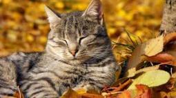 cat leave